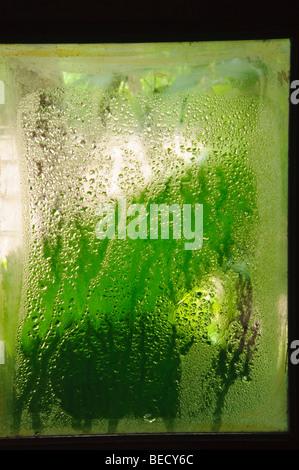 La condensation sur la fenêtre en verre Banque D'Images