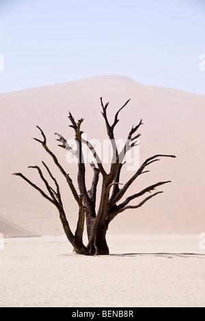 Silhouette d'un arbre mort dans le Namib Naukluft Deadvlei, Parc National, Sossusvlei, Namibie, Afrique. Banque D'Images