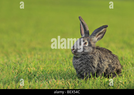 Un lapin on Green grass Banque D'Images