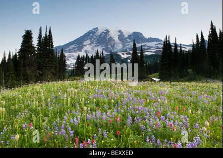 Les fleurs sauvages d'été, Paradise, Mount Rainier National Park, Washington Juillet Banque D'Images