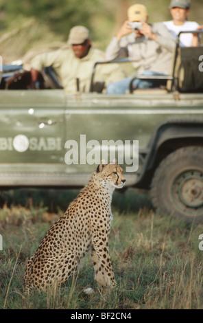 Jeu-dur regarder safari Guépard (Acinonyx jubatus) en premier plan, l'Afrique du Sud