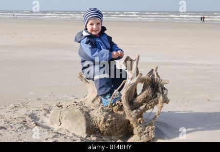 Petit garçon, 2 ans, école sur une racine d'arbre jusqu'à la plage de la mer du Nord, Vejer plage, Jutland, Danemark, Banque D'Images