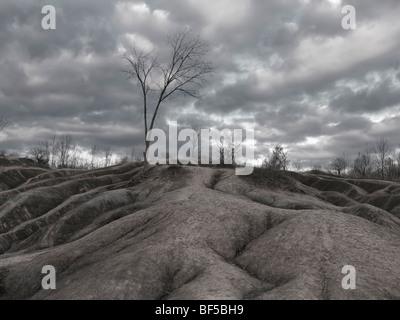 Arbres sans feuilles à Cheltenham en automne. Badlands L'Ontario, Canada. Banque D'Images