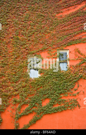 Couvercle de vignes lierre mur du bâtiment avec des fenêtres, sur la rue Main dans la ville historique de Mississippi Banque D'Images