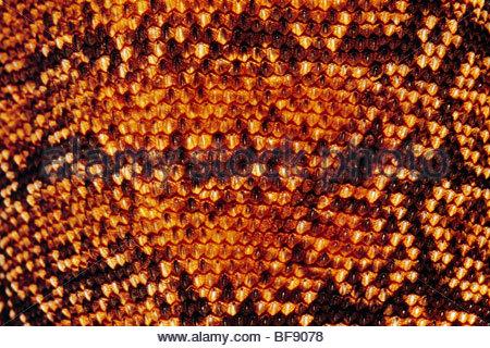 Le goanna Goulds, Varanus gouldii motif peau flavirufus, Australie Banque D'Images