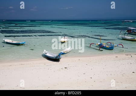 Bateaux sur Lembognan Island Beach, Bali. Les fermes d'algues sont clairement visibles dans l'eaux claires et chaudes Banque D'Images