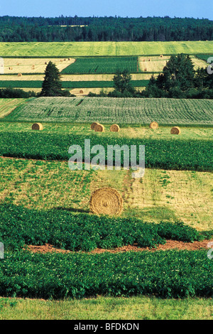 Bottes de foin dans les terres agricoles, Kinkora, Prince Edward Island, Canada Banque D'Images