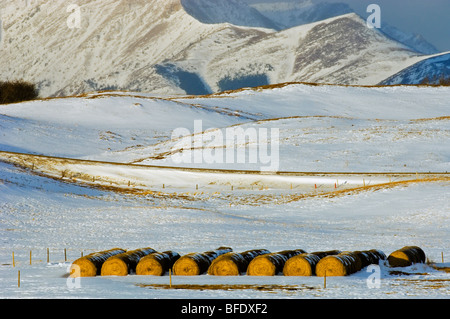 Bottes de foin dans champ neigeux, Twin Butte, Alberta, Canada Banque D'Images