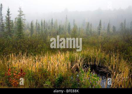 Le brouillard du matin à l'automne dans le parc Algonquin, Ontario, Canada Banque D'Images