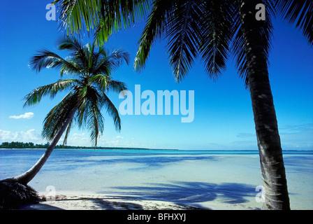 Palmiers sur la plage, Punta Cana, République Dominicaine Banque D'Images