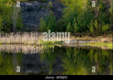 Des affleurements rocheux et au début du printemps, la couleur de son feuillage reflètent dans l'étang de castor, Banque D'Images