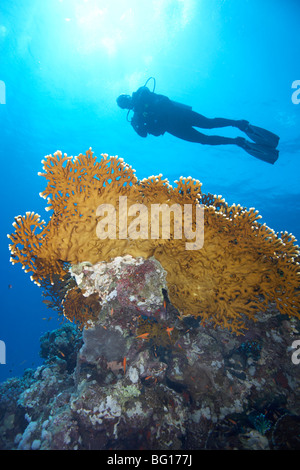 Sous-marin en plongée Banque D'Images
