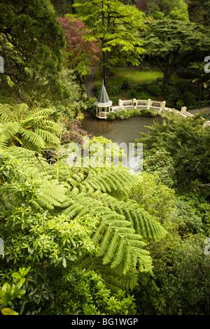 Les fougères arborescentes et Duck Pond, le Jardin botanique de Wellington, Wellington, Île du Nord, Nouvelle-Zélande, Banque D'Images
