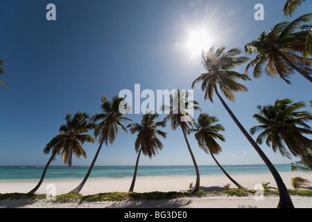 Punta Cana, République dominicaine, Antilles, Caraïbes, Amérique Centrale Banque D'Images