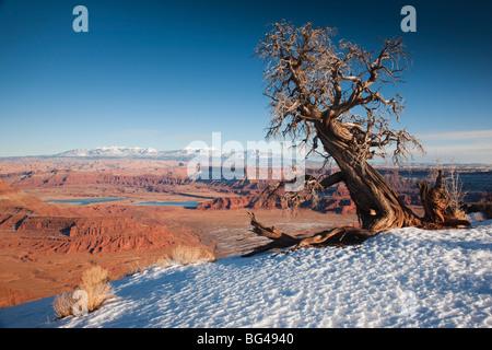 USA, Utah, Moab, Dead Horse Point State Park, vue sur le méandre Canyon, hiver Banque D'Images
