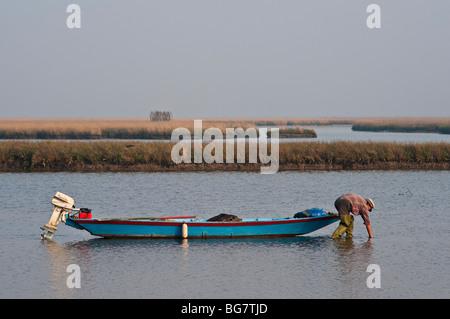 Un pêcheur qui se framasse dans les eaux peu profondes de la lagune vénitienne alors qu'il cherche des palourdes, Banque D'Images
