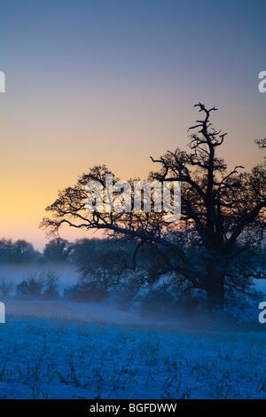 Coucher du soleil d'hiver sur la rivière Kennett Vallée à Ufton dans le Berkshire, Royaume-Uni Banque D'Images