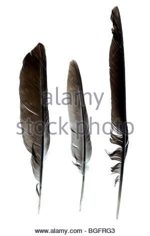 Trois plumes d'oiseau Banque D'Images
