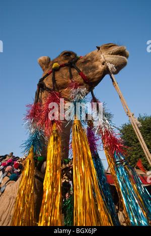 Le Chameau chameau décorées à l'Inde à Pushkar Fair Banque D'Images