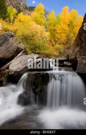 Couleurs d'automne le long du ruisseau de l'ours dans les montagnes de San Juan, près de Ouray, Colorado. Banque D'Images