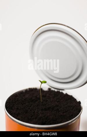 Les semis dans le sol à tin can Banque D'Images
