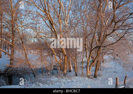 Nouvelle Palestine, Indiana - un soleil levant s'allume d'arbres sur les rives d'un ruisseau sur une ferme de l'Indiana Banque D'Images