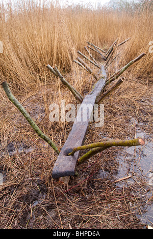 Reconstruction de la piste sucrée (un chemin néolithique d'homme ou un itinéraire à travers les zones humides) Shapwick Heath, Somerset Levels, Royaume-Uni