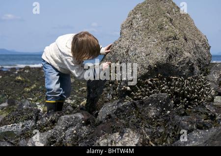 Garçon explore grande plage rock avec les moules et les balanes Banque D'Images