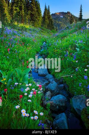 Abondance de fleurs sauvages le long Creek dans le Parc National de Mont Rainier dans l'état de Washington, USA