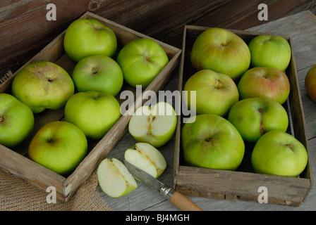 Pommes Bramley de plateaux en bois Banque D'Images