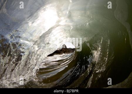La perspective pour les surfeurs à la recherche à l'intérieur du canon d'une vague. Banque D'Images