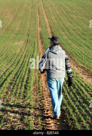Man marche à travers un champ vert dans le Hampshire Royaume-uni sur une journée froide. La récolte est plantée Banque D'Images