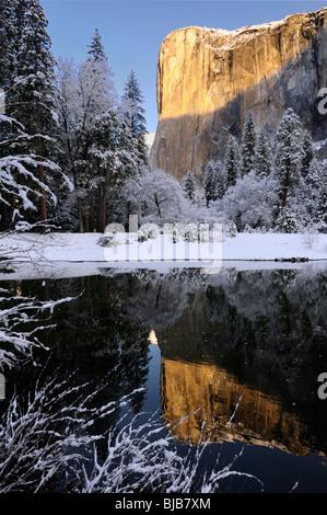 Lever du soleil sur la montagne El Capitan reflète dans la Merced River avec des arbres couverts de neige dans la vallée de Yosemite Yosemite National Park California USA