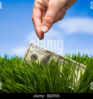 100 dollars dans l'herbe. Banque D'Images