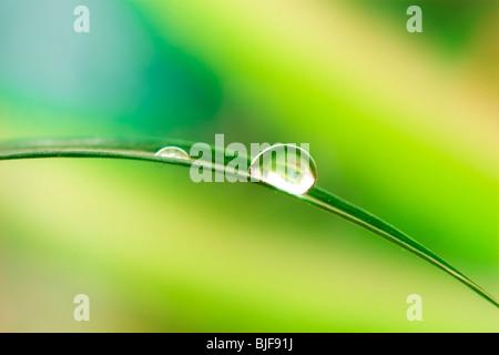 Gouttes d'eau sur les feuilles des plantes vertes Banque D'Images