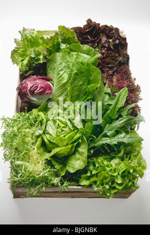 Assortiment de laitues et feuilles de salade dans la caisse - Banque D'Images