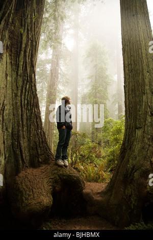 Homme debout entre deux séquoias géants dans la forêt Banque D'Images