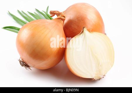 Bulbes d'oignon frais sur un fond blanc Banque D'Images