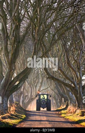 Tracteur venant par le Dark Hedges, tôt le matin. Co. d'Antrim, en Irlande du Nord. Banque D'Images