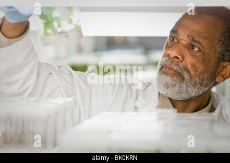 African American Scientist working in laboratory