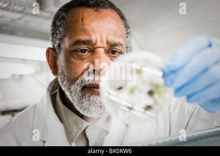 African American Scientist holding specimen in petri dish