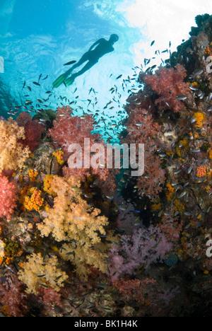 Patch de corail et snorkeler, Ko Rawi, la mer d'Andaman, Thaïlande Banque D'Images