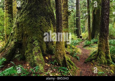 Ancienne forêt pluviale, le parc provincial de la Carmanah Walbran, île de Vancouver, Colombie-Britannique, Canada Banque D'Images