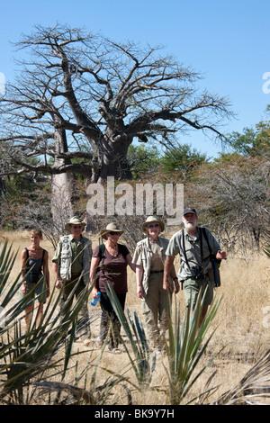 Groupe de touristes sur un safari à pied passent un vieux Baobab (Adansonia digitata) dans la bande de Caprivi en Namibie