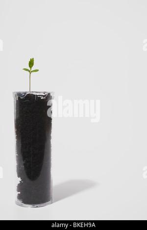 Les semis dans le sol dans une bouteille de pilules en plastique Banque D'Images