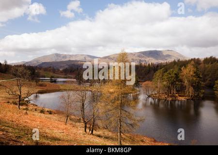 Coniston, Cumbria, England, UK. Tarn Hows avec Coniston le vieil homme au-delà de la montagne dans le Parc National de Lake District