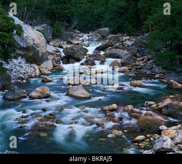 Yosemite National Forest, CA L'eau blanche de la rivière Merced, Merced River ruissellement du printemps dans le Banque D'Images