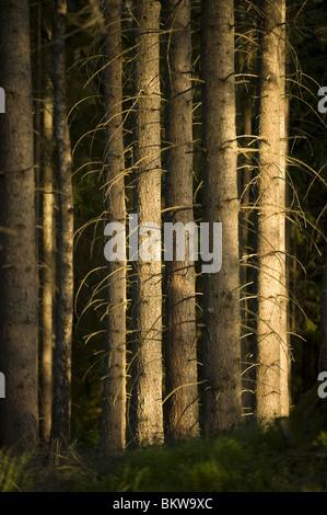 Fermer jlang en lisière de forêt Banque D'Images