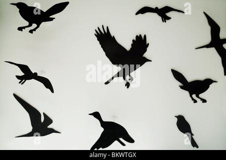 Silhouettes d'oiseaux dans une vitrine d'affichage, Regent Street, London UK Banque D'Images