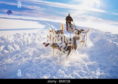 Traîneau à chien Banque D'Images